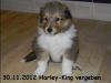 2012-11-30 H-Wurf Harley-King - 1