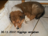 2012-11-30 H-Wurf Higgings - 2