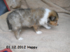 2012-12-01 H-Wurf Happy - 4_1