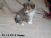 2012-12-01 H-Wurf Happy - 4_2