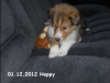 2012-12-01 H-Wurf Happy - 4_4