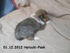 2012-12-01 H-Wurf Hatschi-Pooh - 7_1