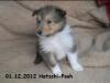 2012-12-01 H-Wurf Hatschi-Pooh - 7_2
