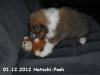 2012-12-01 H-Wurf Hatschi-Pooh - 7_3