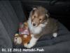 2012-12-01 H-Wurf Hatschi-Pooh - 7_4