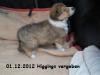 2012-12-01 H-Wurf Higgings - 2_1