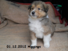 2012-12-01 H-Wurf Higgings - 2_2