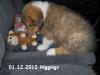 2012-12-01 H-Wurf Higgings - 2_3