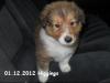 2012-12-01 H-Wurf Higgings - 2_4