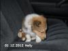 2012-12-01 H-Wurf Holly - 5_3