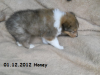 2012-12-01 H-Wurf Honey - 6_1