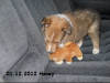2012-12-01 H-Wurf Honey - 6_3