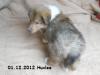 2012-12-01 H-Wurf Huxlee - 3_1