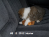 2012-12-01 H-Wurf Huxlee - 3_3