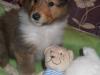 2012-12-05 H-Wurf Hatschi-Pooh - 7