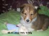 2012-12-05 H-Wurf Holly - 5