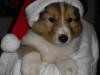 2012-12-06 H-Wurf Happy - 4