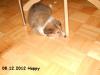 2012-12-08 H-Wurf Happy - 4