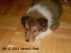 2012-12-08 H-Wurf Hatschi-Pooh - 7