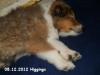 2012-12-08 H.Wurf Higgings - 2