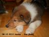 2012-12-08 H-Wurf Huxlee - 3