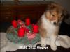 2012-12-09 H-Wurf Higgings - 2