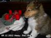 2012-12-09 H-Wurf Honey - 6