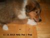 2012-12-11 H-Wurf Holly - 5
