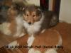 2012-12-12 H-Wurf Hatschi-Pooh - 7