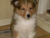 2012-12-12 H-Wurf Holly - 5