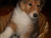 2012-12-17-h-wurf_higgings-2