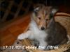 2012-12-17-h-wurf_honey-6