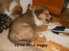 2012-12-18 H-Wurf Happy - 4
