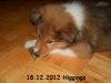 2012-12-18 H-Wurf Higgings - 2