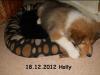 2012-12-18 H-Wurf Holly - 5