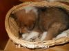 2012-12-18 H-Wurf Honey - 6