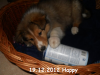 2012-12-19- H-Wurf Happy - 4