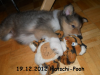 2012-12-19 H-Wurf Hatschi-Pooh - 7