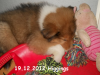 2012-12-19 H-Wurf Higgings - 2