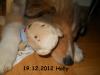 2012-12-19 H-Wurf Holly - 5
