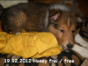 2012-12-19 H-Wurf Honey - 6
