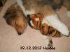 2012-12-19 H-Wurf Huxlee - 3