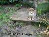 2012-12-20 H-Wurf Happy - 4
