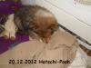 2012-12-20 H-Wurf Hatschi-Pooh - 7