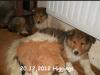 2012-12-20 H-Wurf Higgings - 2