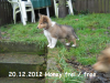 2012-12-20 H-Wurf Honey - 6