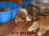 2012-12-20 H-Wurf Huxlee - 3