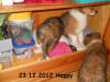 2012-12-23 H-Wurf Happy - 4