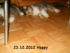 2012-12-23 H-Wurf Happy - 4_1