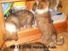 2012-12-23 H-Wurf Hatschi-Pooh - 7